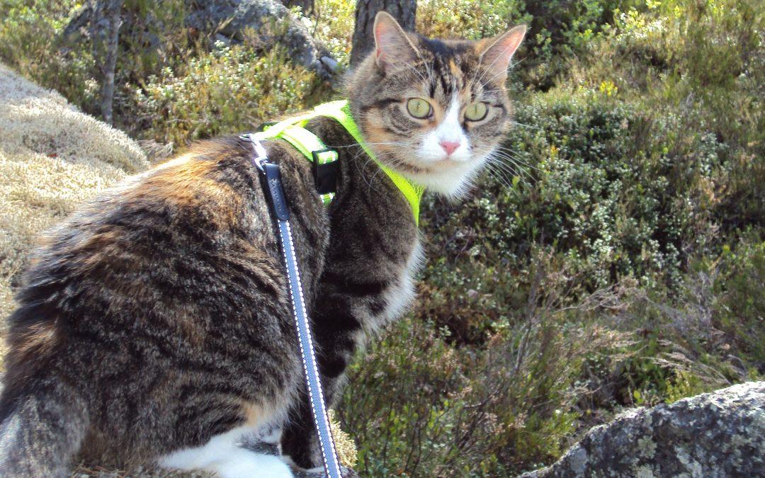 Metsäretkelle kissan kanssa?
